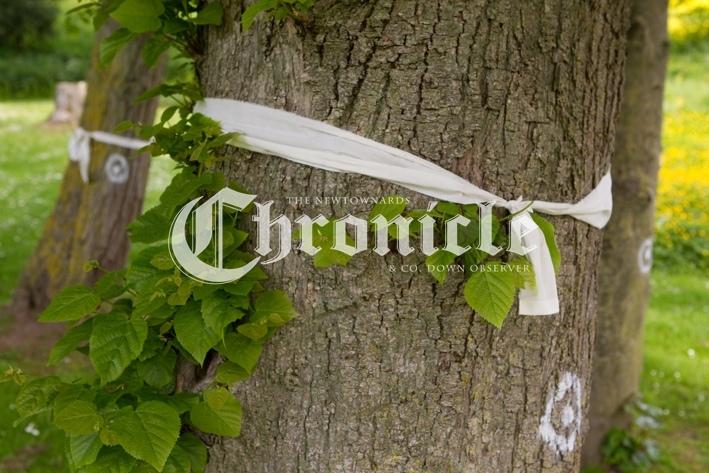 B61-10-6-21-Pferry-trees-ribbons