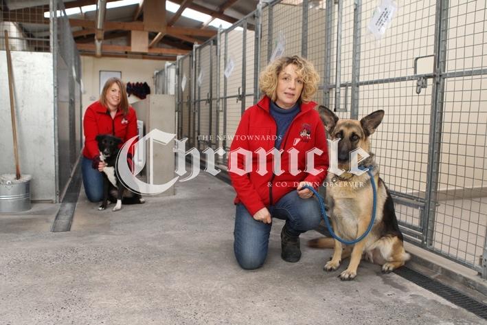 B16-14-1-21-Bblack-dog-kennel