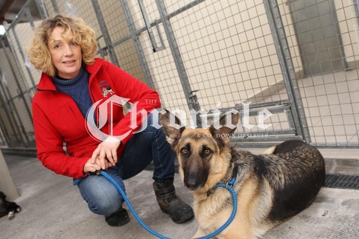 B17-14-1-21-Bblack-dog-kennel