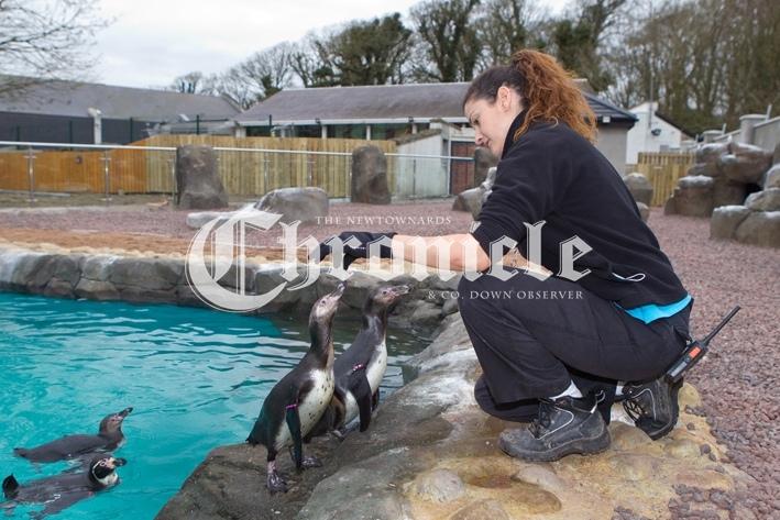 B34-25-3-21-Pferry-Penguins