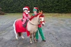 B49-6-12-18 S'field horse Erin