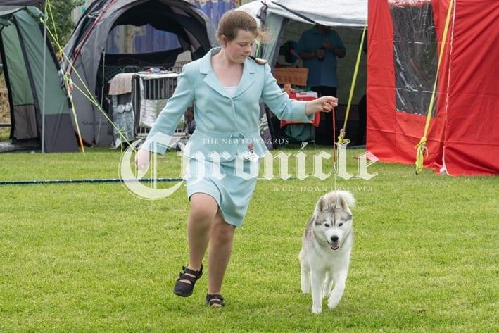 0a859a32-n12-8-8-19-dog-show-11